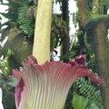 Reportage jardin des plantes