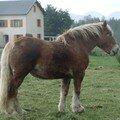 2008 04 22 Un cheval