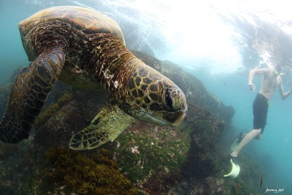 face to face with a turtle bis