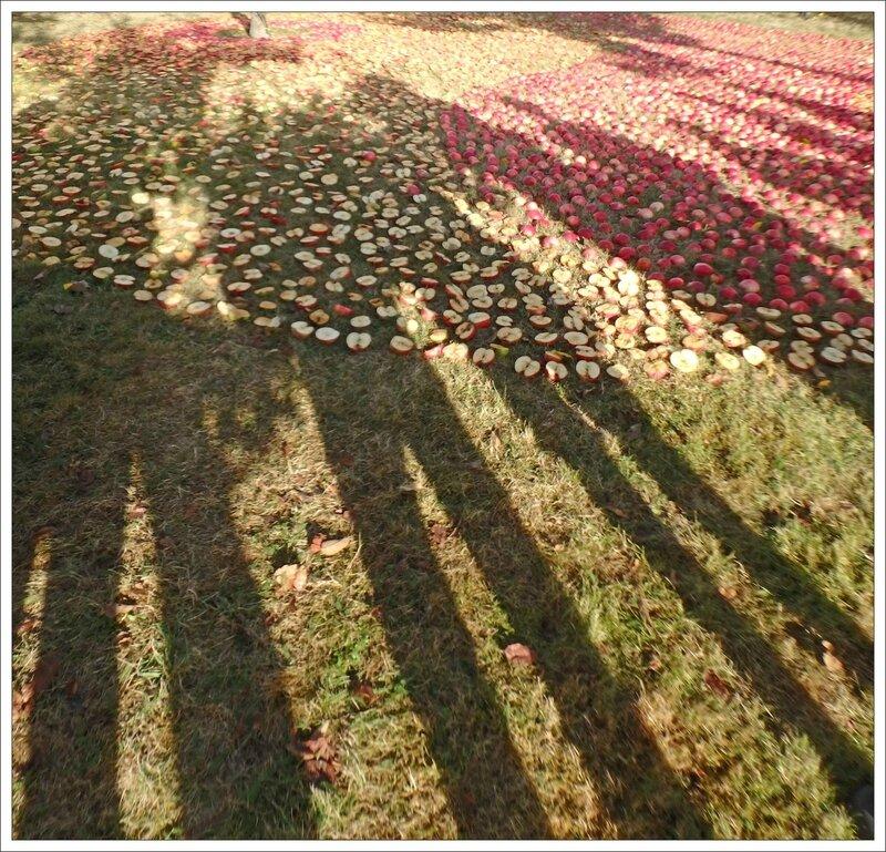 St-Marc La Lande pommes 6 ombres 170916