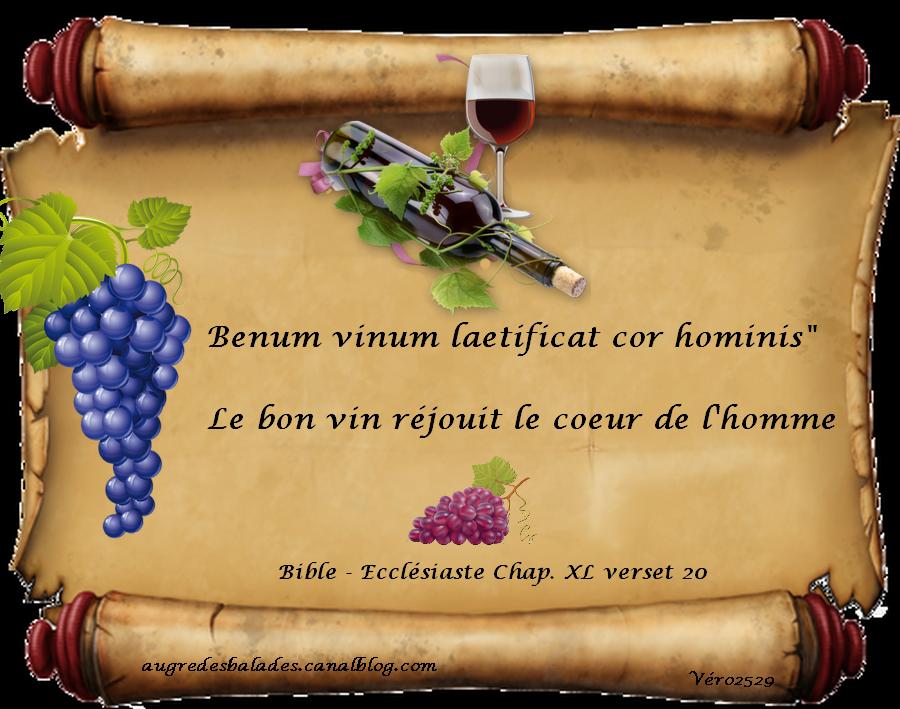 citations de vin