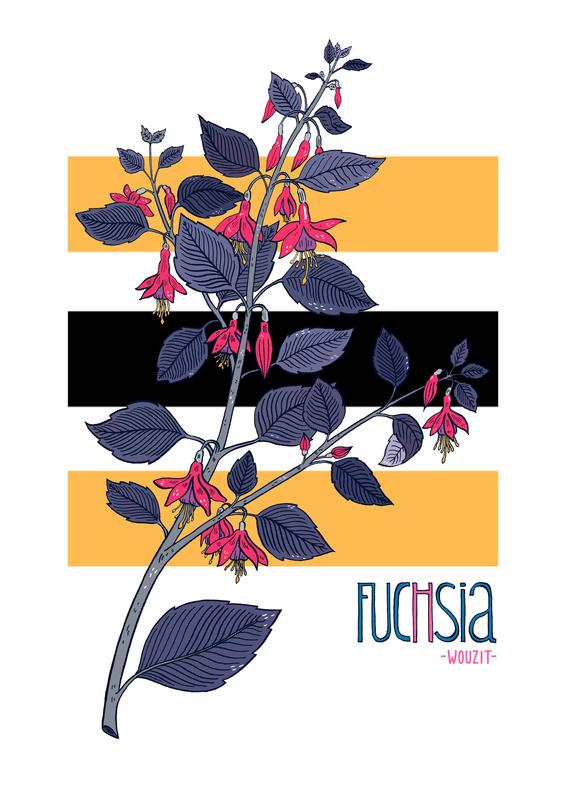 fuchsia couverture