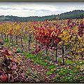 Vignes du Réal Martin Hyères