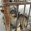 #event #animaux #algérie : actions, mails et aide