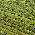 Jumièges, récolte des pommes dans un verger de la vallée de Seine
