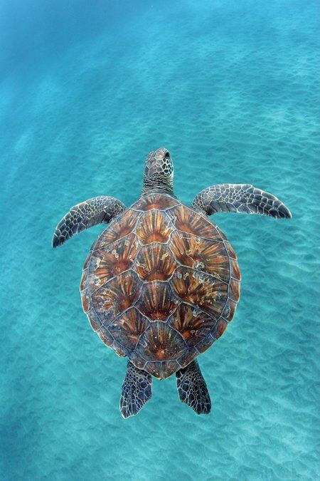 tortue_21