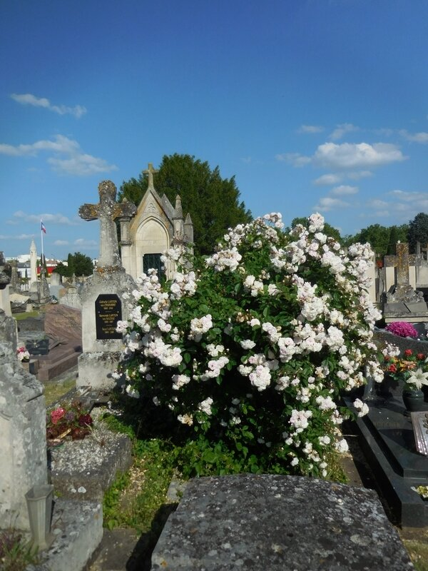 Tombe fleurie