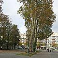 Chelles touche 371 000 euros du département pour aménager le parc du souvenir