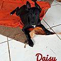 Daisy sauvée cyclone sept