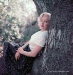 1953-09-02-LA-Laurel_Canyon-Tree_Sitting-013-1