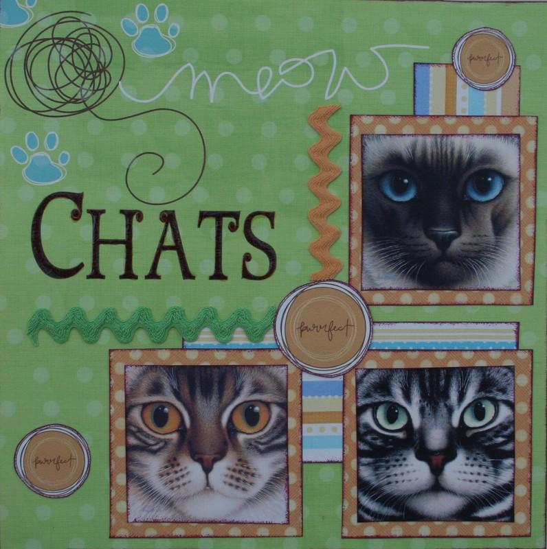 Les chats de Béa