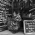 chat-paris-photo-e1429716349885