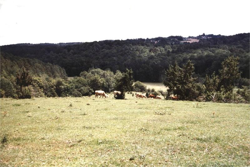 vaches à Sourbarie