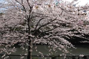JapanDSC_2996_