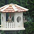 Week-end de comptage national des oiseaux des jardins !