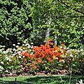 Calendrier des floraisons des arbustes et rosiers