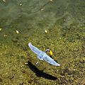 oiseaux sud-américains