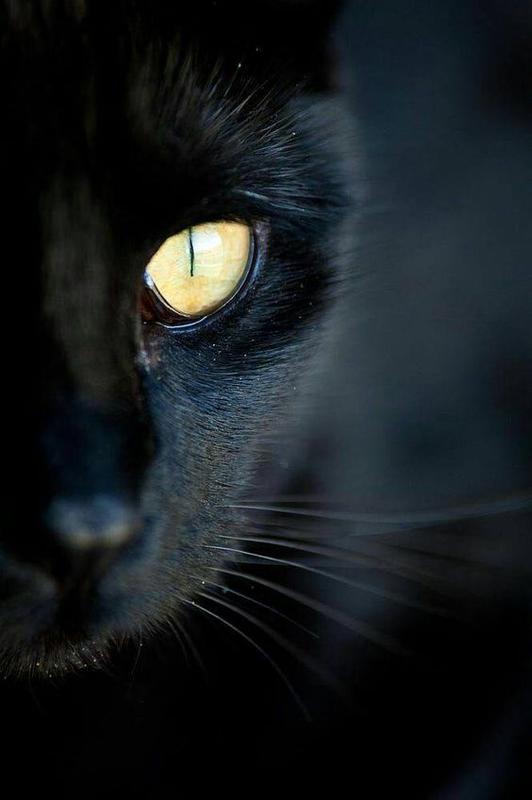 chat noir_1