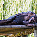 chimpanze beauval4