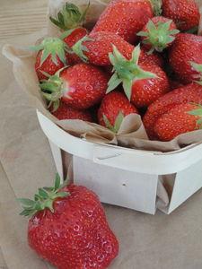 fred_fraises_01
