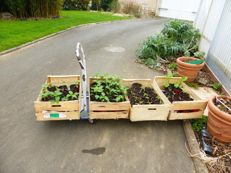 2-plants semis (9)