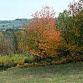 Pour vous souhaiter une très belle journée... encore quelques clichés des couleurs de l'automne ! (j'en ai encore en réserve)