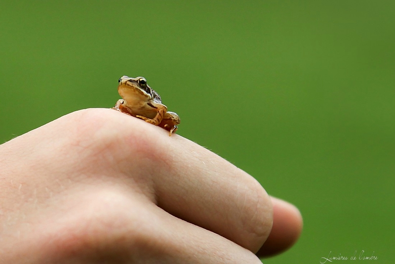 w_Mini grenouille_13 03 08_8665