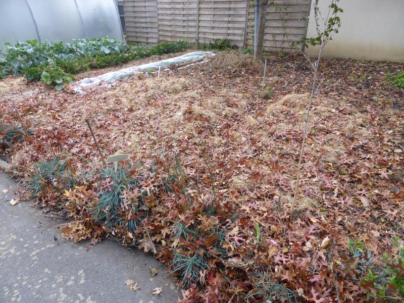 19-feuilles, paillage (3)
