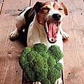 Aliments naturels
