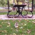 ecureuil-banc