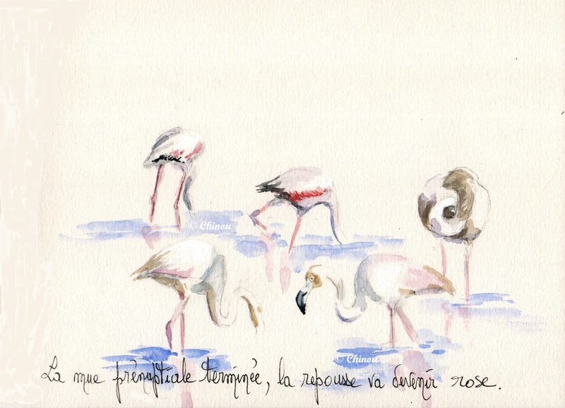 Flamants