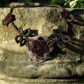 Feuilles et fleurs au crochet d'Alex