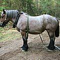 Poulette 5 ans 720 kg