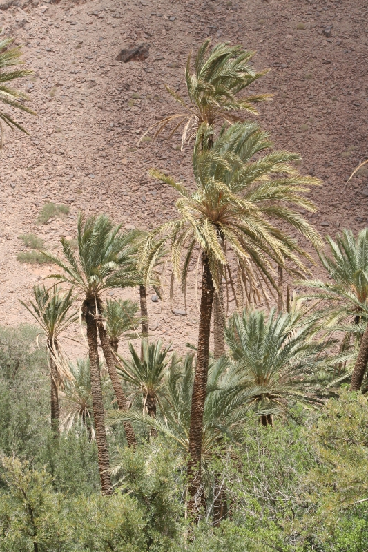 maroc 106