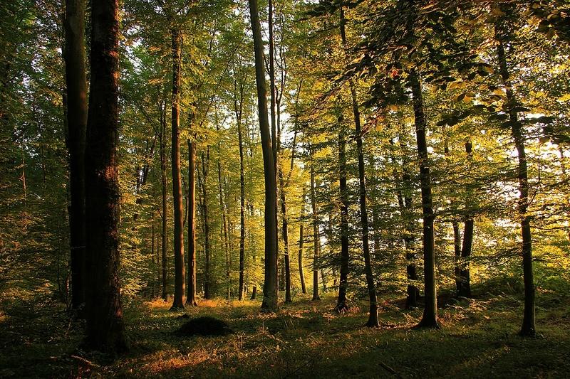 photo http://vers-le-vent.blogspot.fr