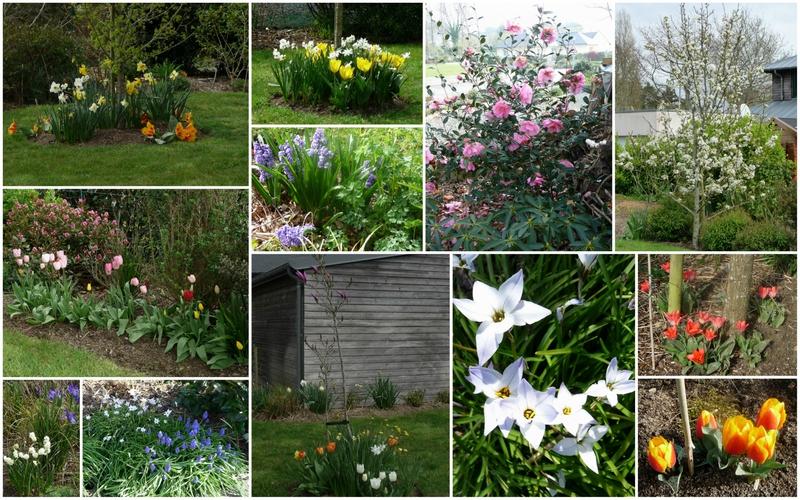 Montage fleurs avril