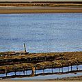 Lac d'Hossegor parcs à huitres 2