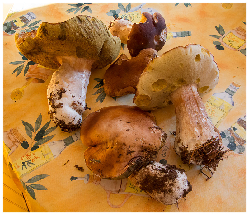 cepes andre