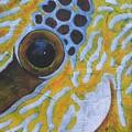 Oeil de Poisson picot