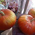 28-potiron rouge d'étampes -www.passionpotager.canalblog.com