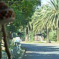 allée de palmiers à Bahar Dar