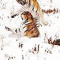tigresFa1szrg39o1_1280