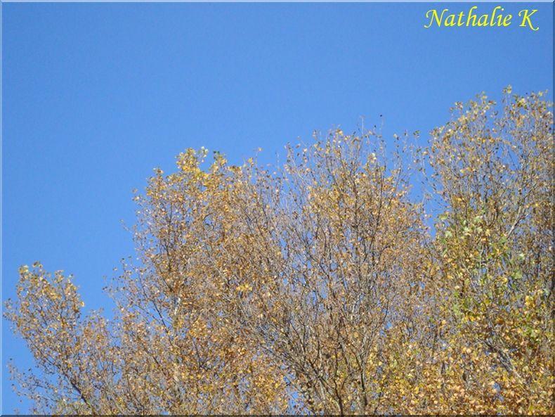 _c__LNK_le_5_novembre_2010_032
