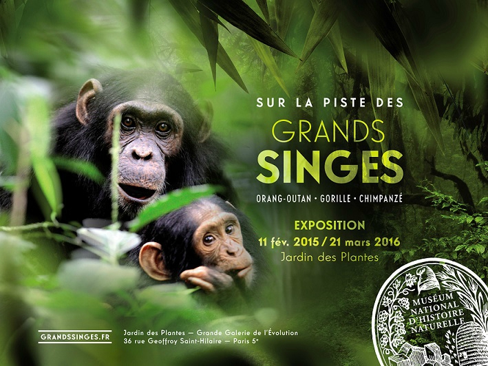 Sur La Piste Des Grands Singes Au Jardin Des Plantes De Paris