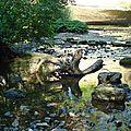 Arbre mort dans rivière - Cascade du Hérisson Jura 2