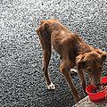 jeune chien sur ST Rose 1