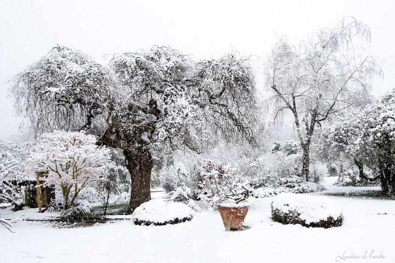 wb_Sophora Bonne Maison neige_20190123_1293b