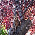Ozenx, petite mimine dans les arbres (64)