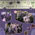 Glycine et Clematite