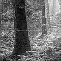 Dans les rayons du 27 septembre 2013 (noir et blanc)
